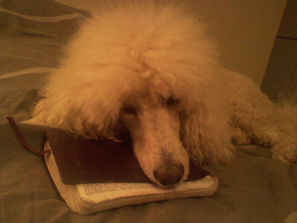 Cosette Resting on the Word